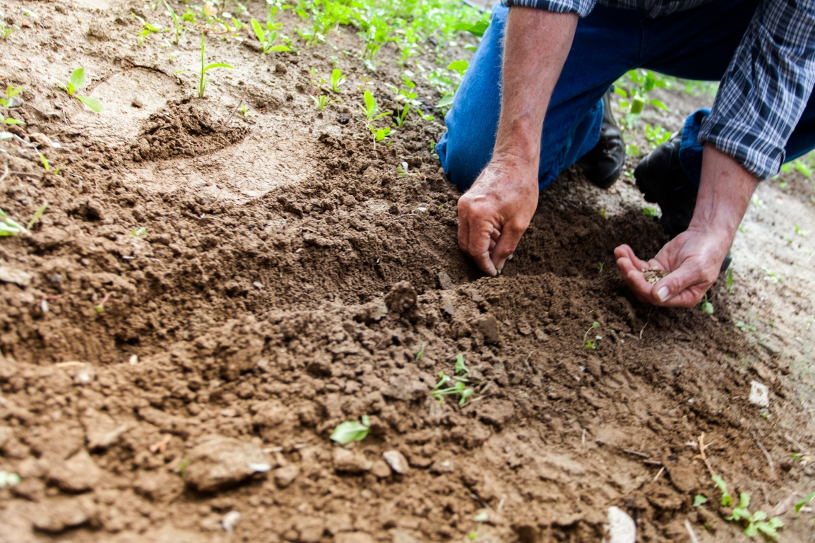 Planting seeds by Binyamin Mellish